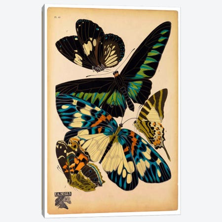 Butterflies Plate 16, E.A. Seguy Canvas Print #PCA176} by Print Collection Canvas Art