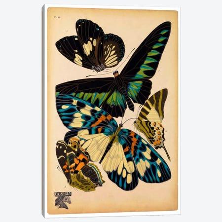 Butterflies Plate 16, E.A. Seguy Canvas Print #PCA176} by E.A. Séguy Canvas Art