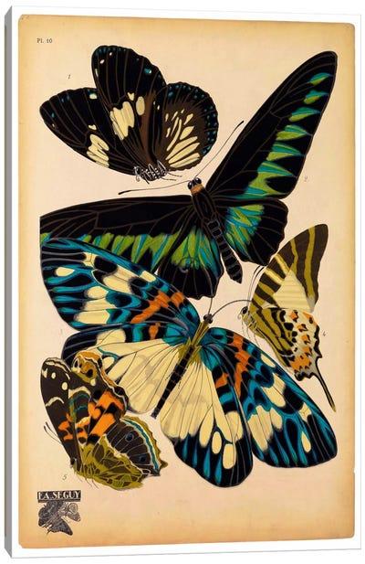 Butterflies Plate 16, E.A. Seguy Canvas Art Print