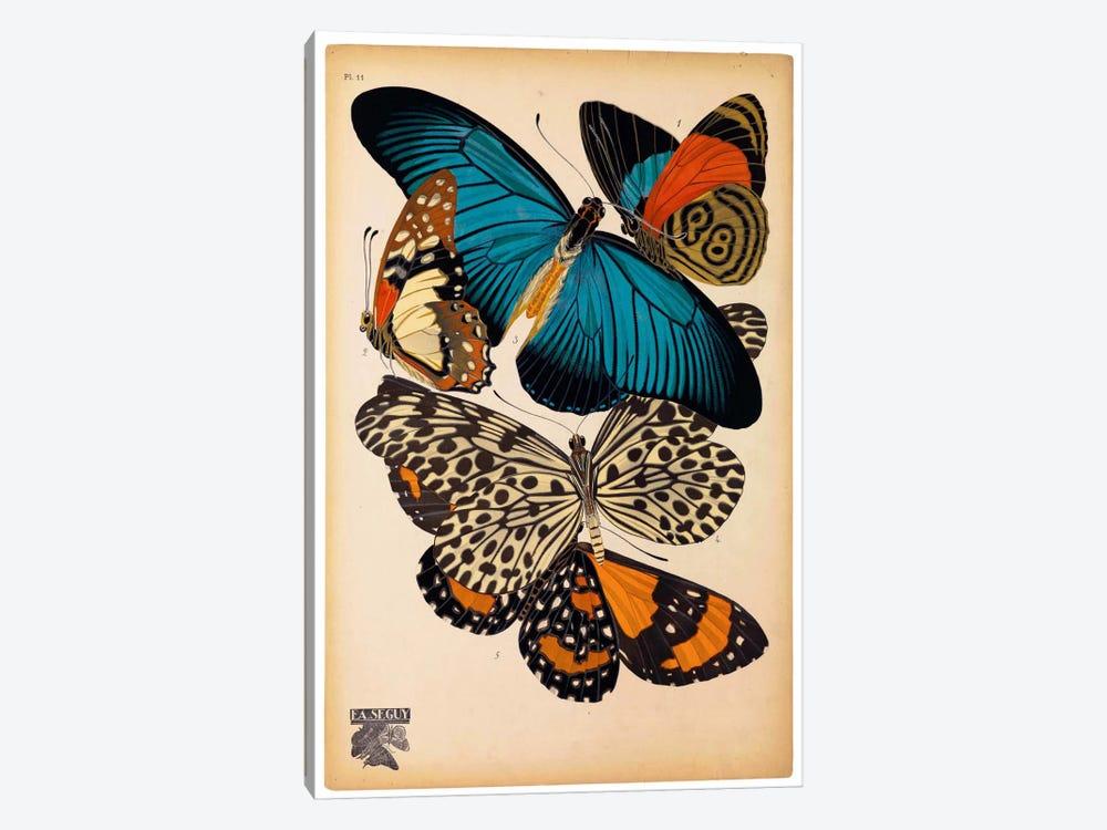 Butterflies Plate 2, E.A. Seguy by E.A. Séguy 1-piece Canvas Wall Art