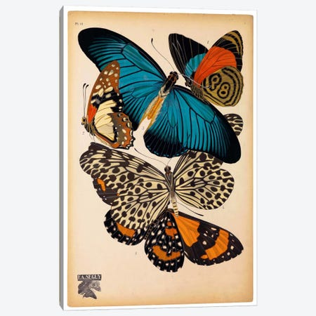 Butterflies Plate 2, E.A. Seguy Canvas Print #PCA177} by Print Collection Canvas Wall Art