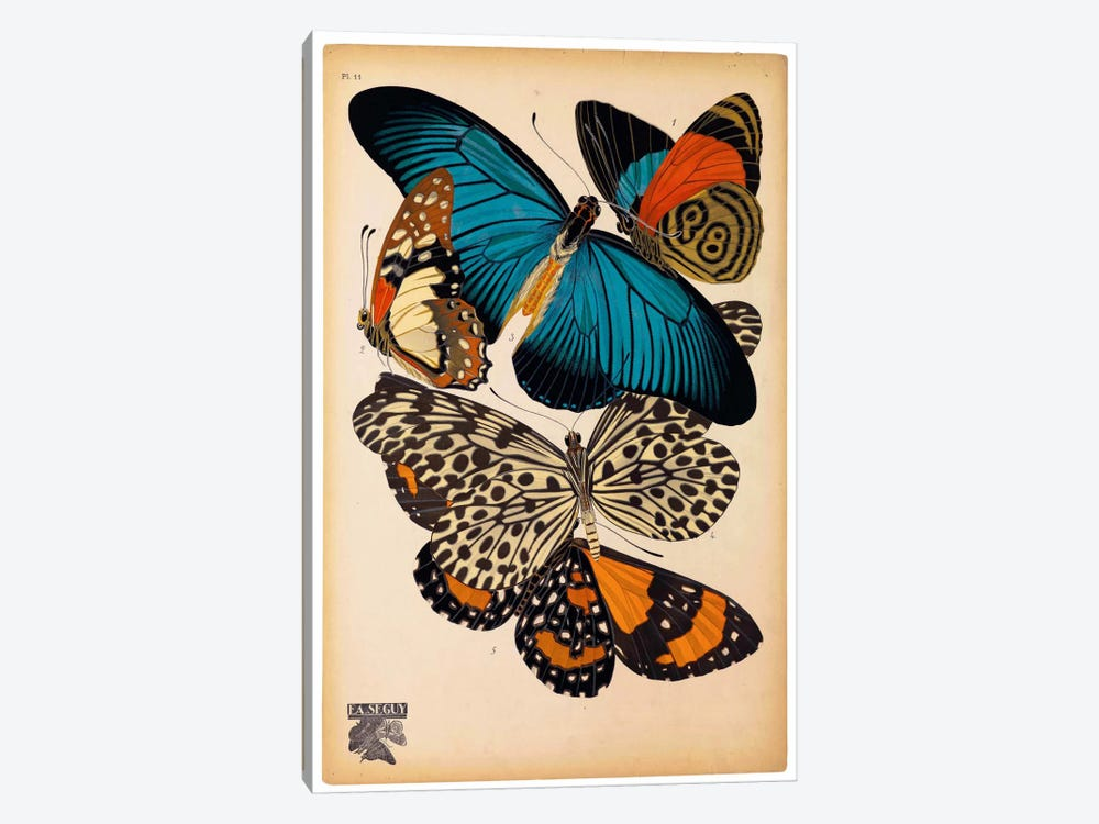 Butterflies Plate 2, E.A. Seguy by Print Collection 1-piece Canvas Wall Art