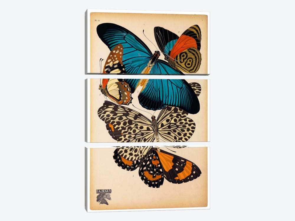 Butterflies Plate 2, E.A. Seguy by Print Collection 3-piece Canvas Wall Art