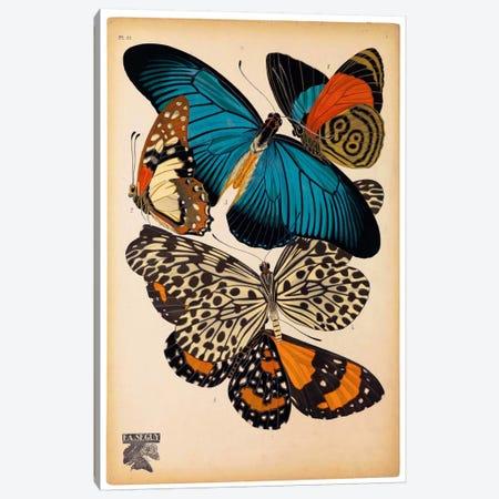 Butterflies Plate 2, E.A. Seguy Canvas Print #PCA177} by E.A. Séguy Canvas Wall Art