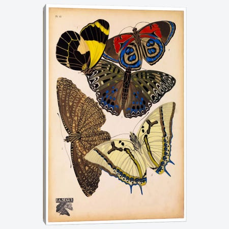 Butterflies Plate 3, E.A. Seguy Canvas Print #PCA178} by Print Collection Canvas Art Print