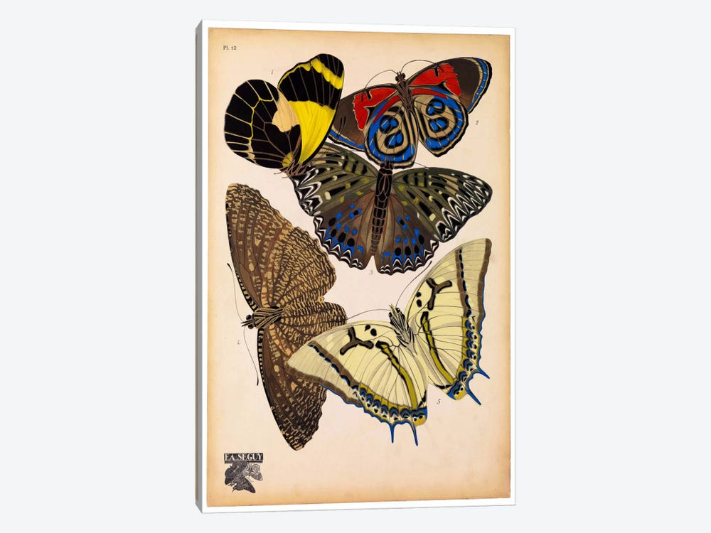 Butterflies Plate 3, E.A. Seguy by Print Collection 1-piece Art Print