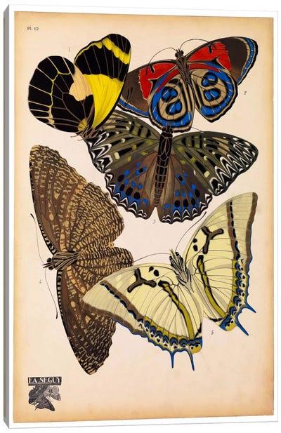 Butterflies Plate 3, E.A. Seguy Canvas Art Print