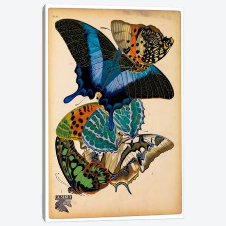 Butterflies Plate 4, E.A. Seguy Canvas Print #PCA179} by Print Collection Canvas Print