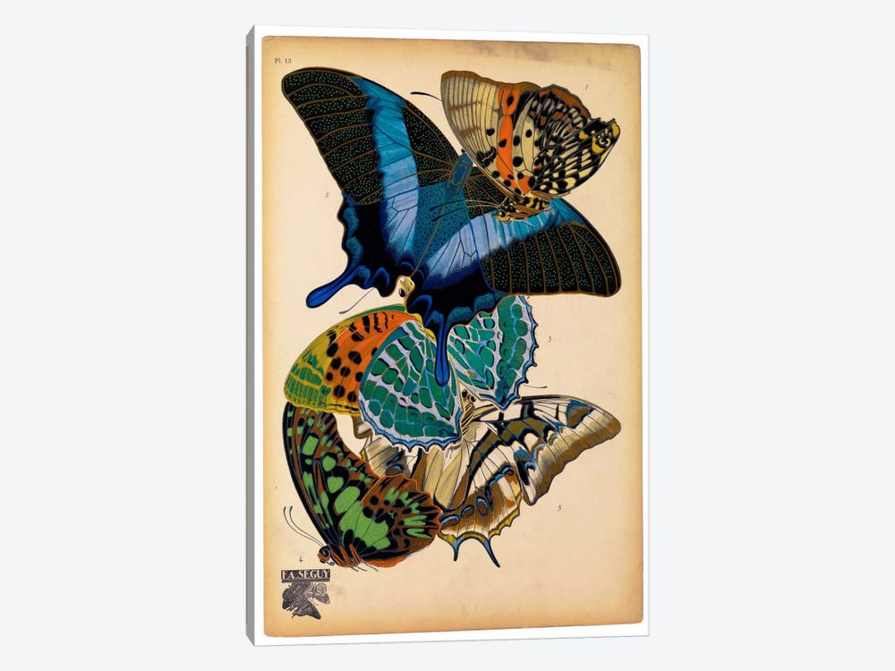 Butterflies Plate 4, E.A. Seguy 1-piece Canvas Art