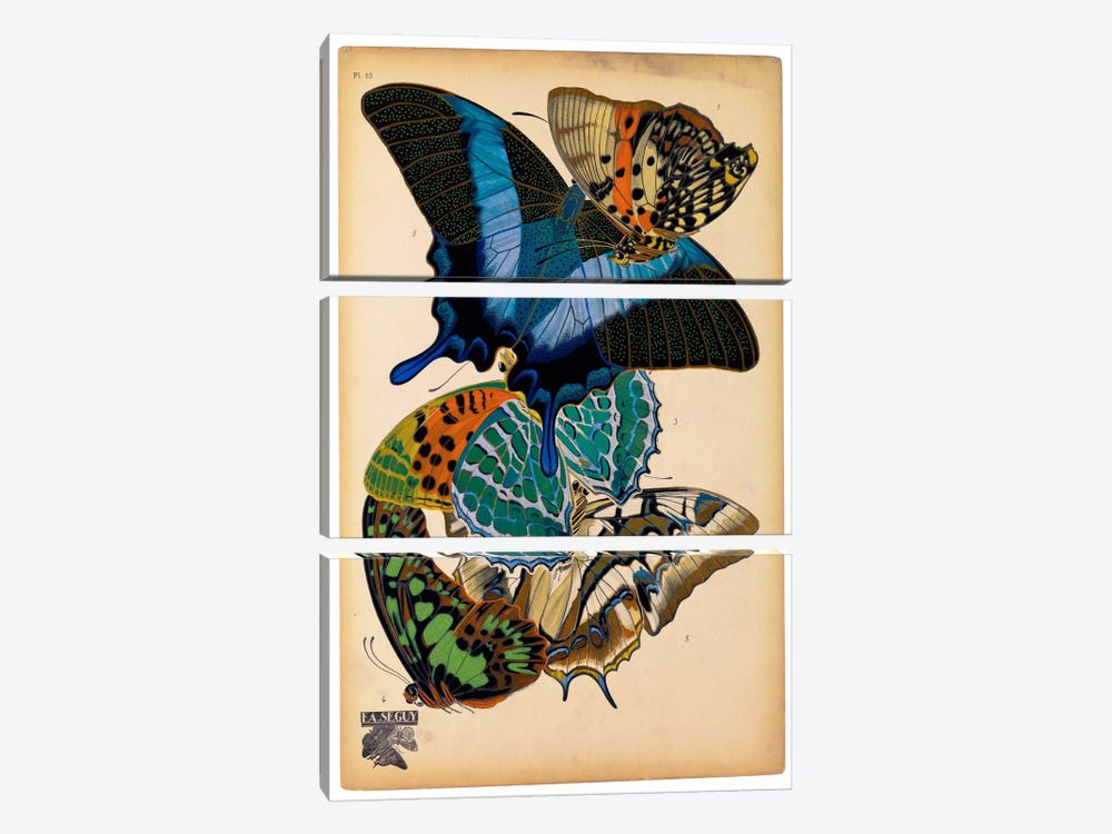 Butterflies Plate 4, E.A. Seguy 3-piece Canvas Art