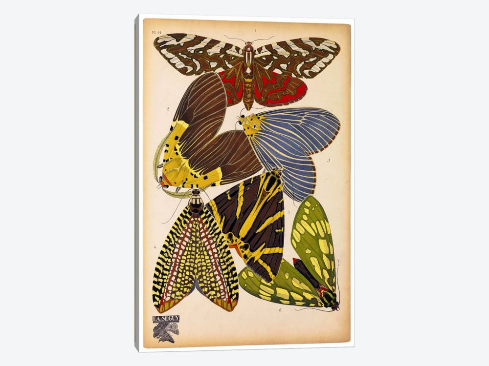 Butterflies Plate 5, E.A. Seguy by Print Collection 1-piece Canvas Art