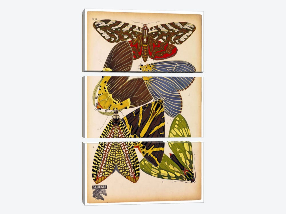 Butterflies Plate 5, E.A. Seguy by Print Collection 3-piece Canvas Art