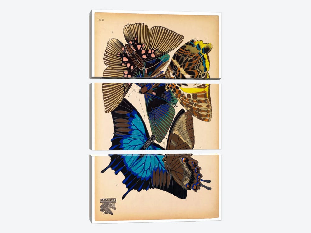 Butterflies Plate 9, E.A. Seguy by Print Collection 3-piece Art Print
