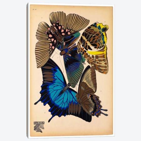 Butterflies Plate 9, E.A. Seguy Canvas Print #PCA181} by E.A. Séguy Canvas Wall Art