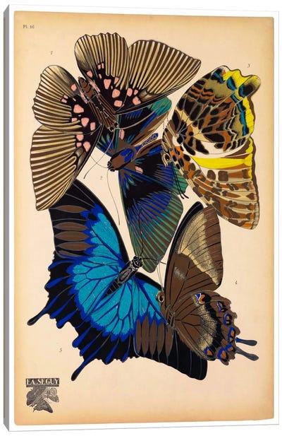 Butterflies Plate 9, E.A. Seguy Canvas Art Print