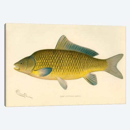 Carp Canvas Print #PCA183} by Print Collection Canvas Wall Art