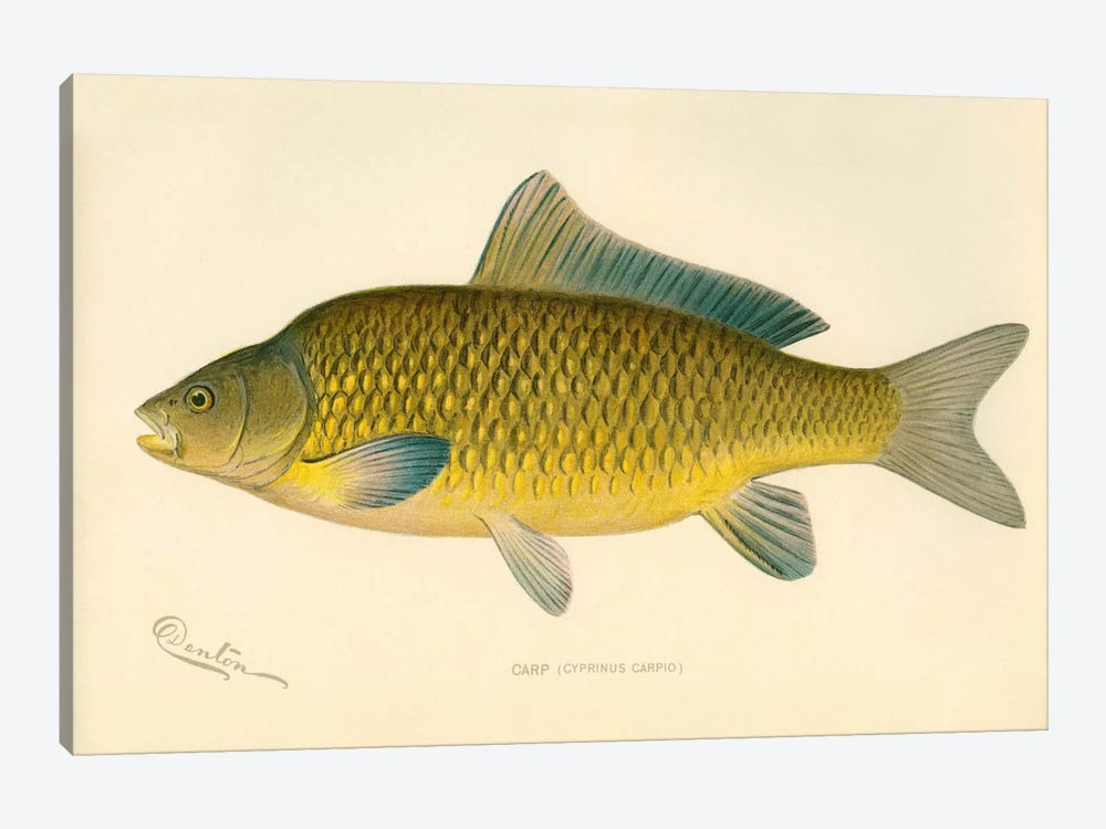 Carp by Print Collection 1-piece Canvas Art Print