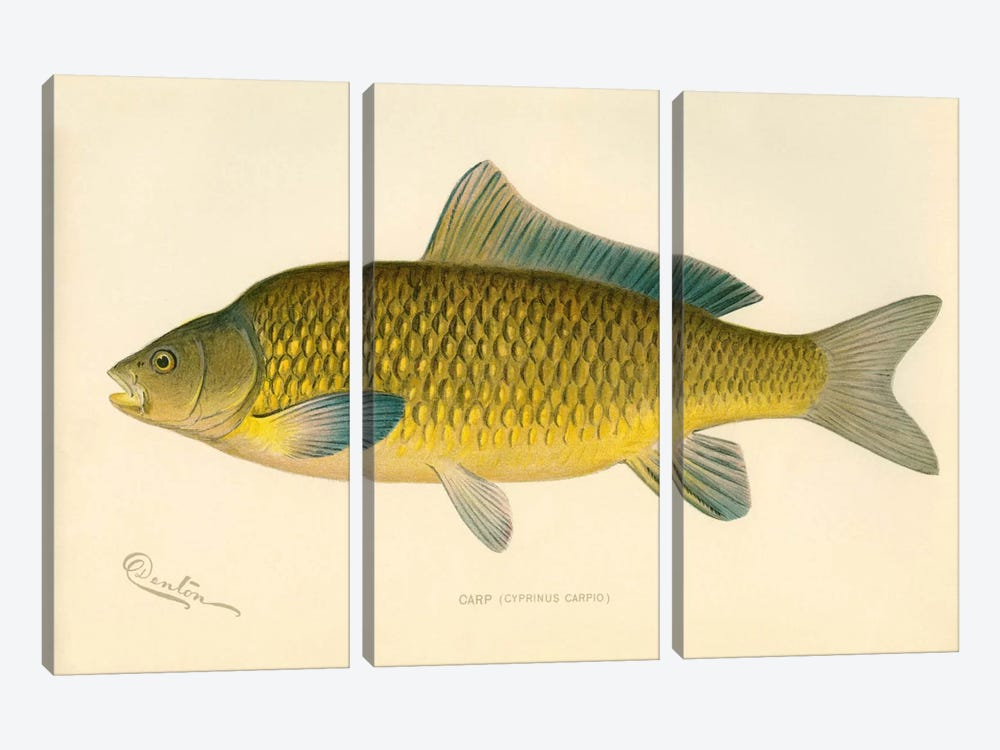 Carp by Print Collection 3-piece Art Print
