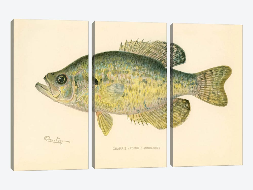 Crappie 3-piece Canvas Wall Art