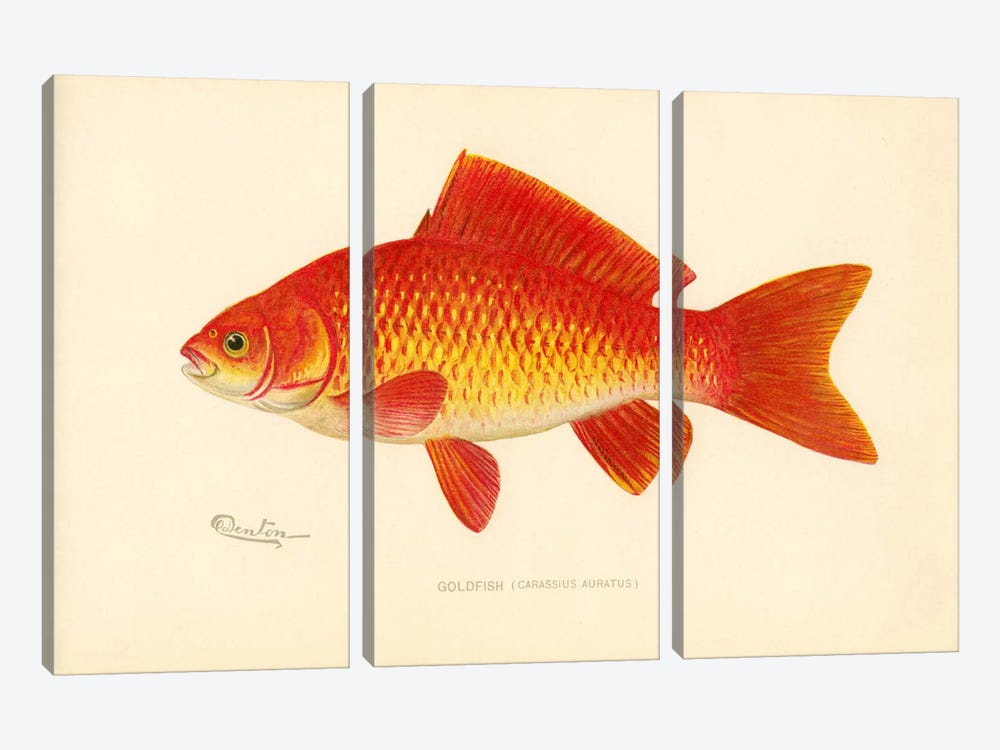 Goldfish by Print Collection 3-piece Canvas Print