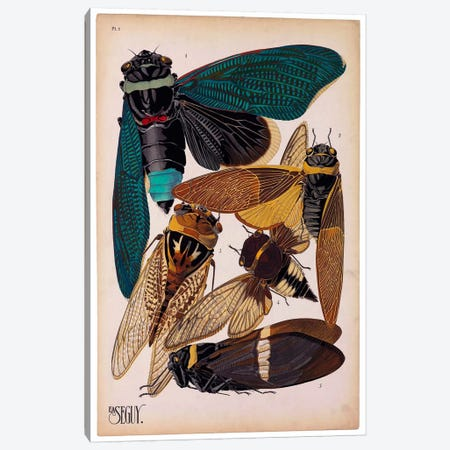Insects, Plate 1 by E.A. Seguy Canvas Print #PCA208} by Print Collection Canvas Print
