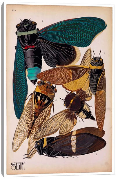 Insects, Plate 1 by E.A. Seguy Canvas Art Print