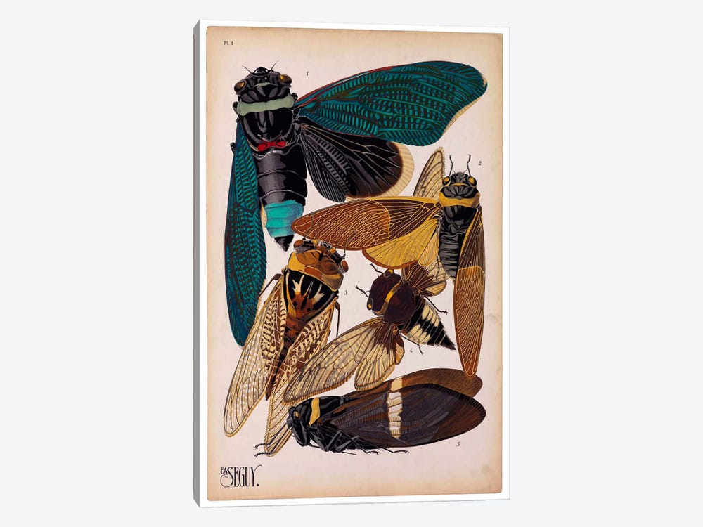 Insects, Plate 1 by E.A. Seguy by Print Collection 1-piece Canvas Wall Art