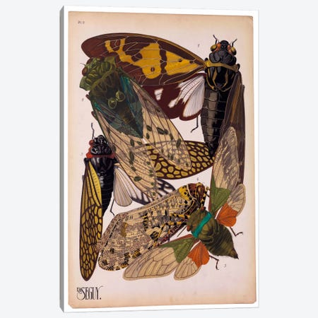 Insects, Plate 11 by E.A. Seguy Canvas Print #PCA209} by Print Collection Art Print