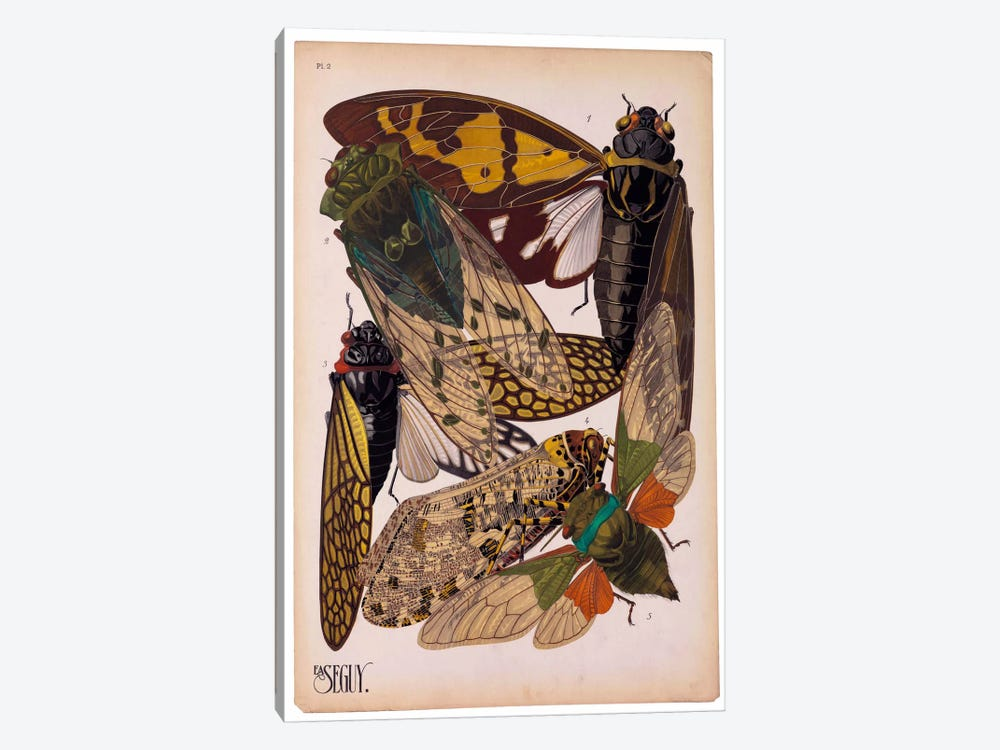 Insects, Plate 11 by E.A. Seguy by Print Collection 1-piece Canvas Print