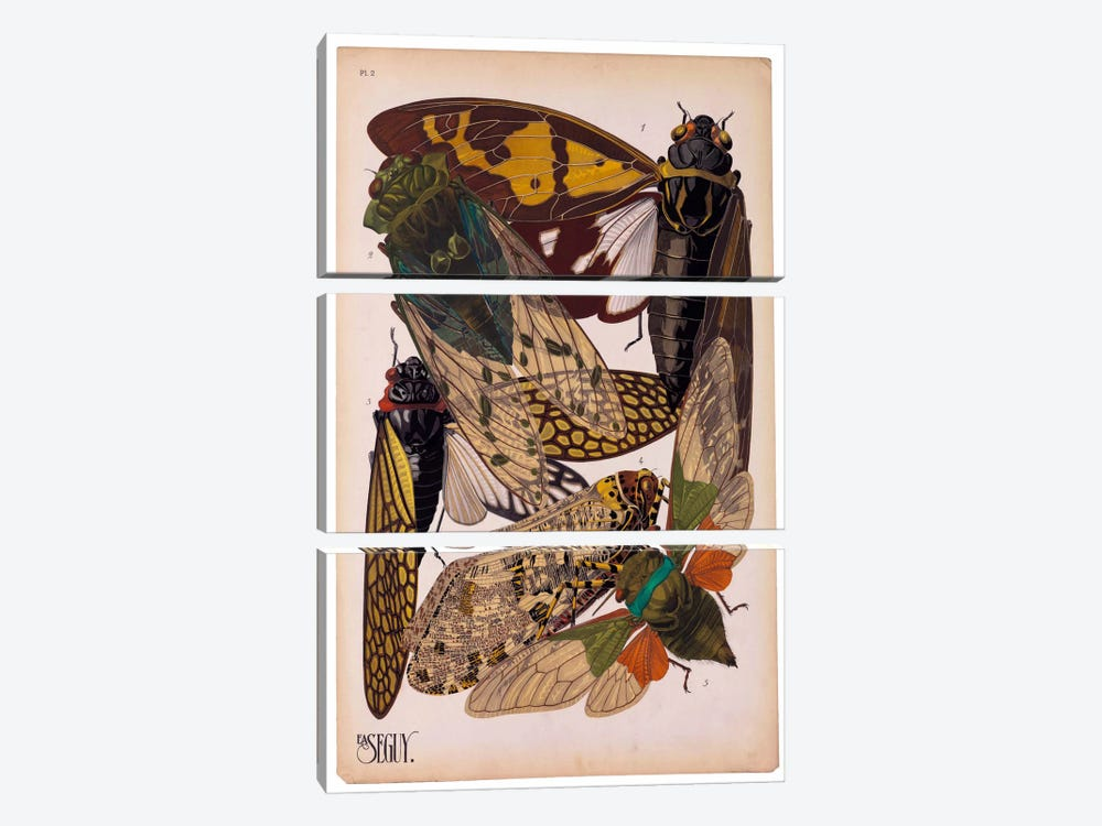 Insects, Plate 11 by E.A. Seguy by Print Collection 3-piece Canvas Print