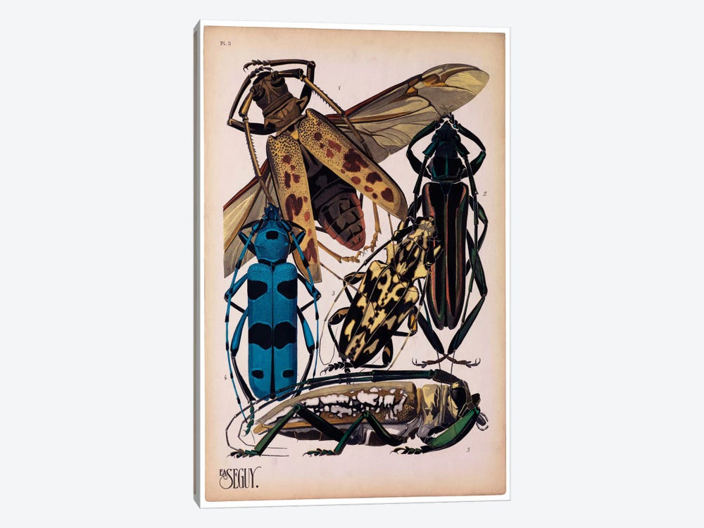 Insects, Plate 13 by E.A. Seguy by Print Collection 1-piece Art Print