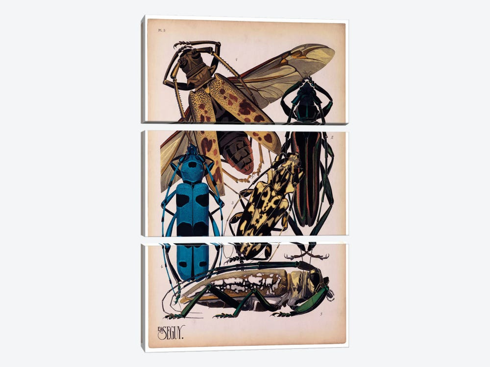 Insects, Plate 13 by E.A. Seguy by Print Collection 3-piece Art Print