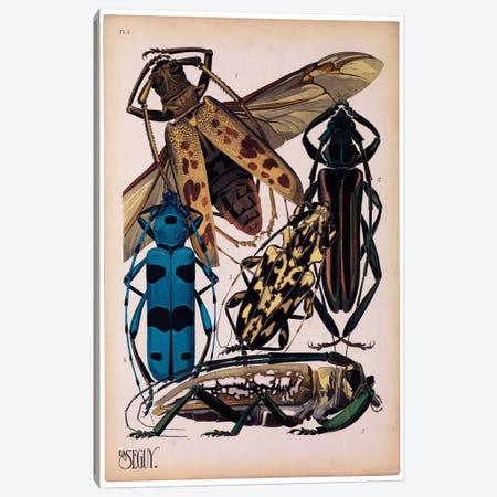 Insects, Plate 13 by E.A. Seguy Canvas Print #PCA210} by Print Collection Canvas Wall Art