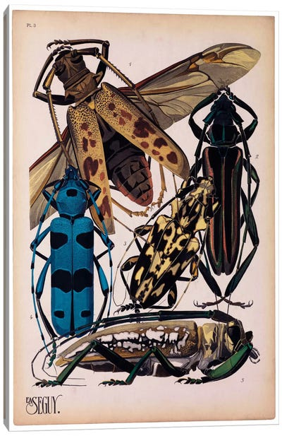 Insects, Plate 13 by E.A. Seguy Canvas Art Print