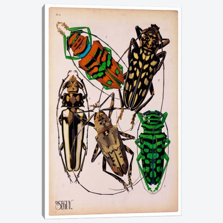 Insects, Plate 14 by E.A. Seguy Canvas Print #PCA211} by Print Collection Canvas Artwork