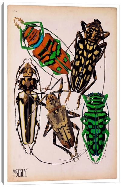 Insects, Plate 14 by E.A. Seguy Canvas Art Print