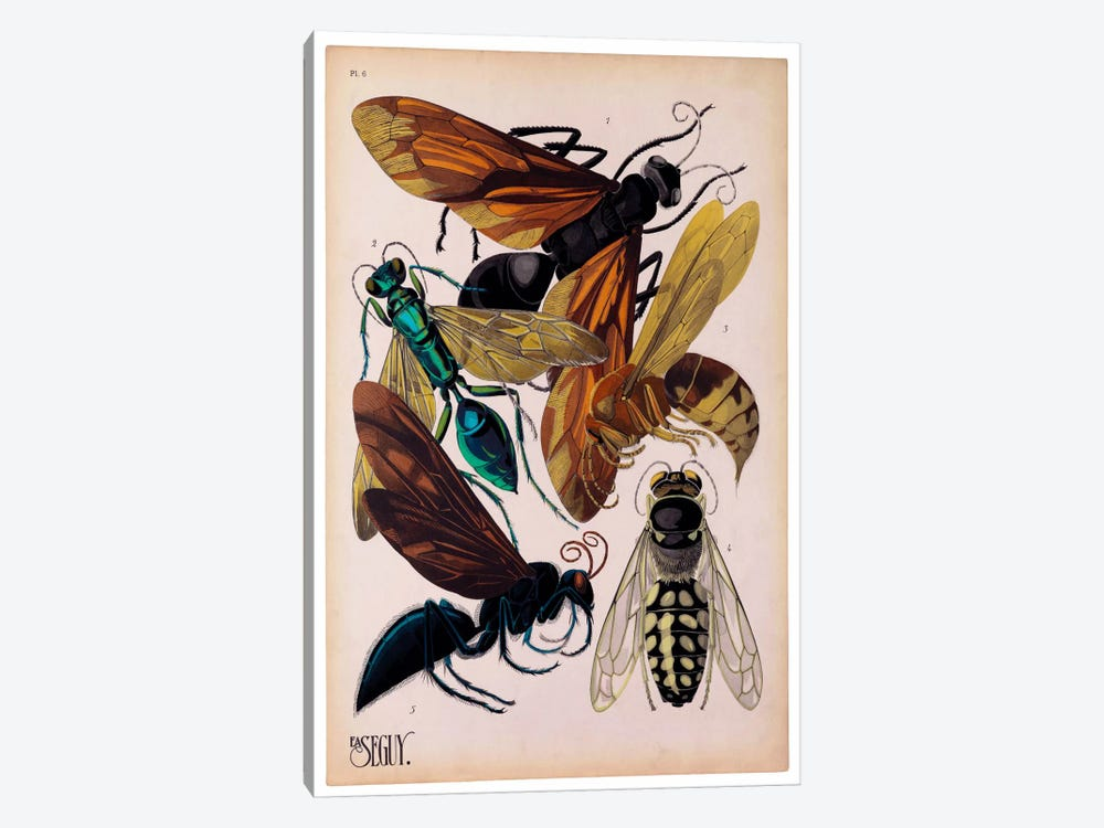 Insects, Plate 15 by E.A. Seguy by Print Collection 1-piece Art Print
