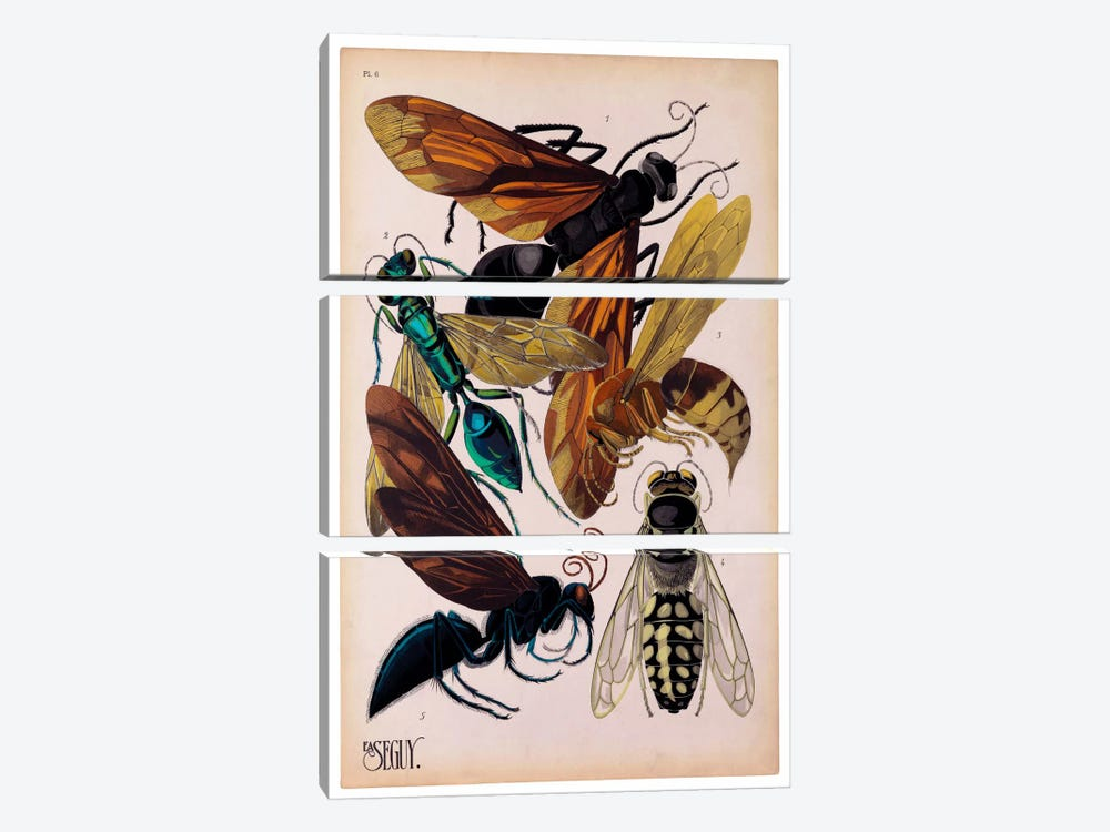 Insects, Plate 15 by E.A. Seguy by Print Collection 3-piece Canvas Print