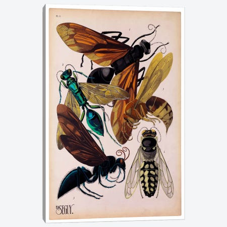 Insects, Plate 15 by E.A. Seguy 3-Piece Canvas #PCA212} by Print Collection Canvas Wall Art