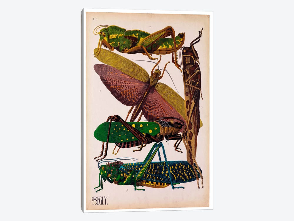 Insects, Plate 16 by E.A. Seguy by Print Collection 1-piece Canvas Art