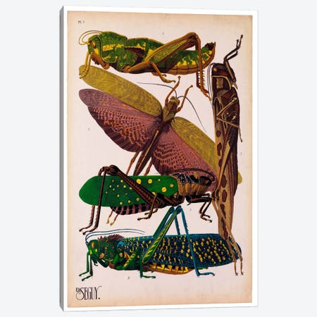 Insects, Plate 16 by E.A. Seguy 3-Piece Canvas #PCA213} by Print Collection Canvas Wall Art