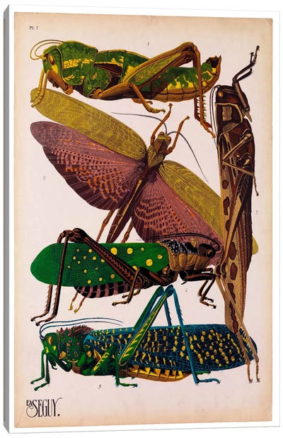 Insects, Plate 16 by E.A. Seguy Canvas Art Print
