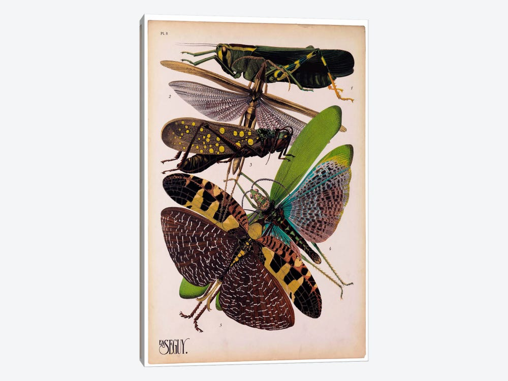 Insects, Plate 2 by E.A. Seguy by Print Collection 1-piece Canvas Print
