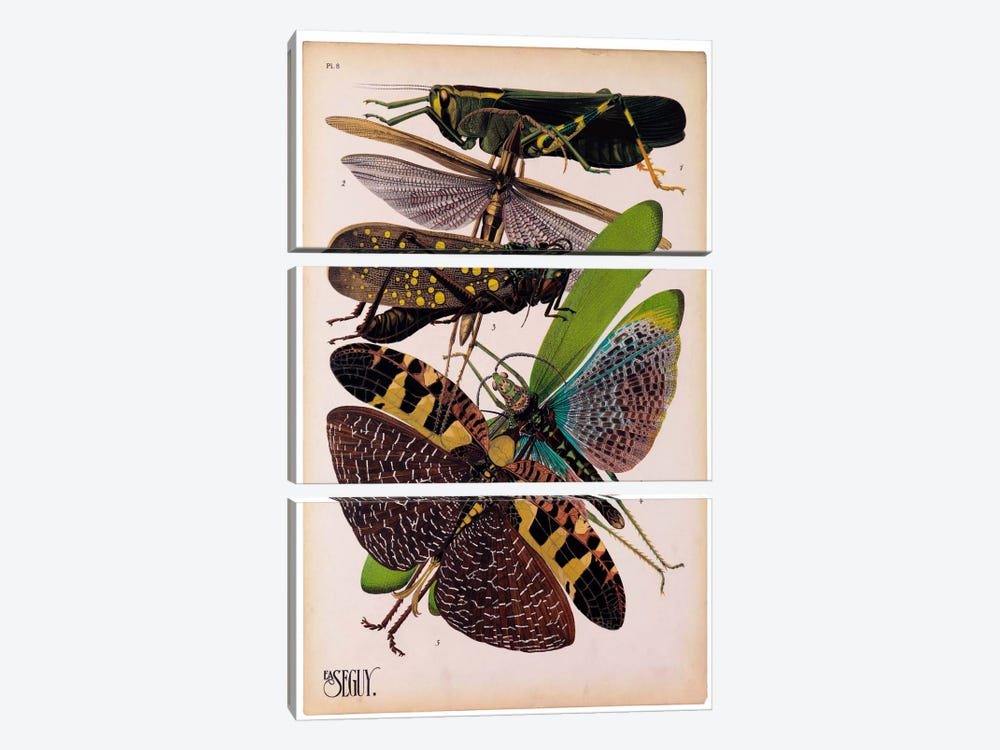 Insects, Plate 2 by E.A. Seguy by Print Collection 3-piece Canvas Art Print