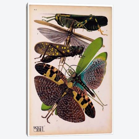 Insects, Plate 2 by E.A. Seguy 3-Piece Canvas #PCA214} by Print Collection Canvas Print