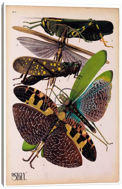 Insects, Plate 2 by E.A. Seguy Canvas Art Print