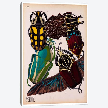 Insects, Plate 3 by E.A. Seguy Canvas Print #PCA215} by Print Collection Art Print