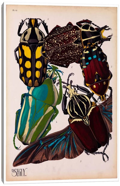 Insects, Plate 3 by E.A. Seguy Canvas Print #PCA215