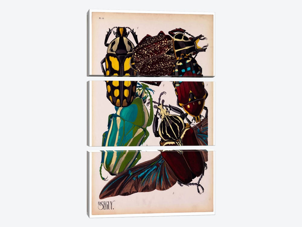 Insects, Plate 3 by E.A. Seguy by Print Collection 3-piece Canvas Art