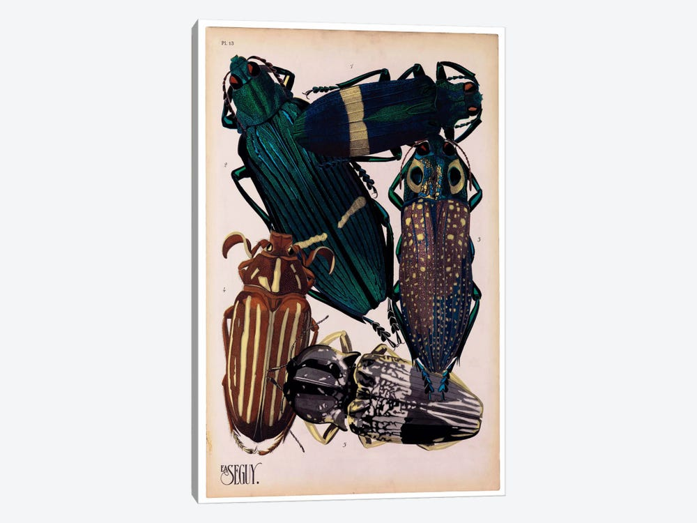 Insects, Plate 4 by E.A. Seguy by Print Collection 1-piece Canvas Art Print